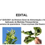 NOVO EDITAL – CITRINOS INFESTADOS COM A PSILA AFRICANA DOS CITRINOS – Trioza erytreae (Del Guercio)